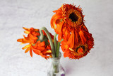a bouquet of wilted gerbera flowers in a small vase.  A symbol of past love