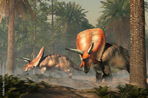Fototapeta Torosaurus was ceratopsian dinosaur that was a frilled and horned, four legged animal