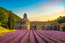 Abbey Of Senanque Blooming Lav...
