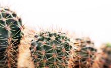 Round Green Cactus, Prickly Pl...