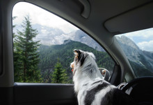 Trip With A Dog In The Car. Tr...