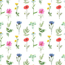 Watercolor Wild Flowers Seamless Pattern. Hand Painted Meadow Flowers On White Background. Red Poppy, Blue Cornflower, Pink Cosmos, Daisy, Green Fern, Mouse Peas, Yellow Buttercup. Summer Print