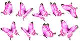 Fototapeta Motyle - butterfly405