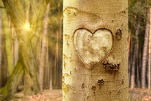 Tree With Carved Heart