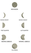 Phases Of Moon, Vector Set Of...