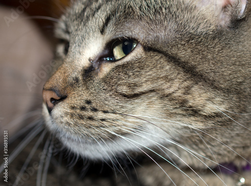 Side profile of a cat's face.