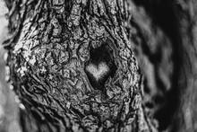 Greyscale Of A Heart-shaped En...