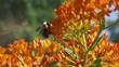 Bees and butterflies pollinate a summer garden.