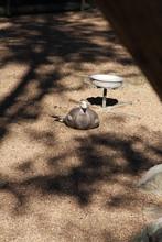 Duck Sitting In Park