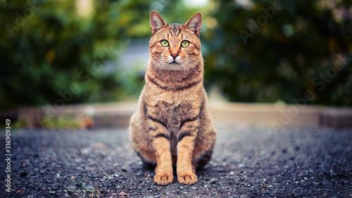 Fototapeta 고양이