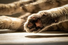 Closeup Of Cat Paws With A Cat...