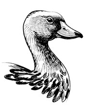 Duck Head. Ink Black And White Drawing