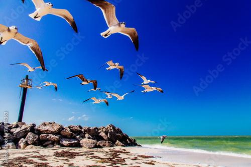 aves Canvas Print