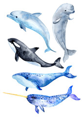 FototapetaSea animals isolated on white background. Killer whale, blue whale, beluga whale, narwhal and bottlenose dolphin.