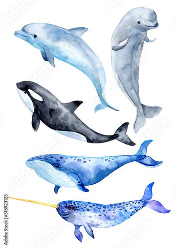 Fotografie, Tablou Sea animals isolated on white background