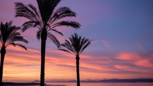 The Silhouette Of Palm Trees A...