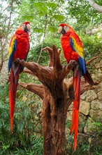 Vertical Shot Of Two Magnificent Macaws Sitting On A Tree Trunk In A Forest