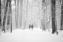 Couple Walking On The Snow Cov...