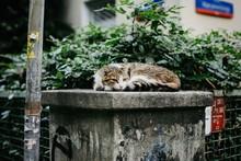 Cute Cat Lying Near The Fences...
