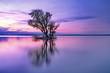 canvas print picture - Baum im See auf Insel im Abendrot