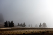 The Morning Mist Envelops The ...
