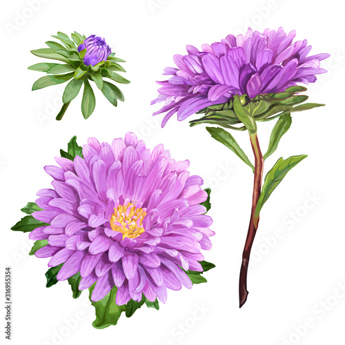 Photo Set of three beautiful summer flowers of violet Aster isolated on white backgrou