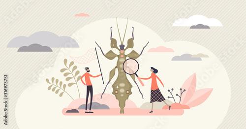 Vászonkép Entomology field concept, flat tiny person entomologists vector illustration