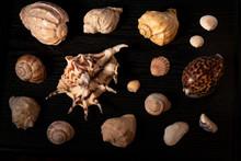Shell, Sea, Isolated, Seashell...