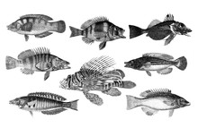 Many Different Fish In Collect...