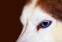 Closeup, Red Haired Dog With B...