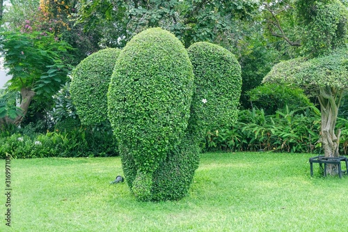 Photo Cute Elephant shaped topiary with elegant white plumeria in ear on green lawn in public park in Thailand