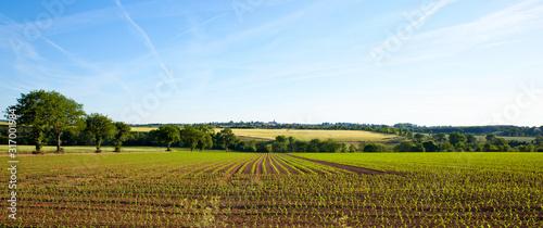 Fototapeta Panorama dans les champs, campagne Française, France.