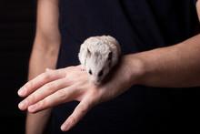 The Hamster In The Guy's Han...