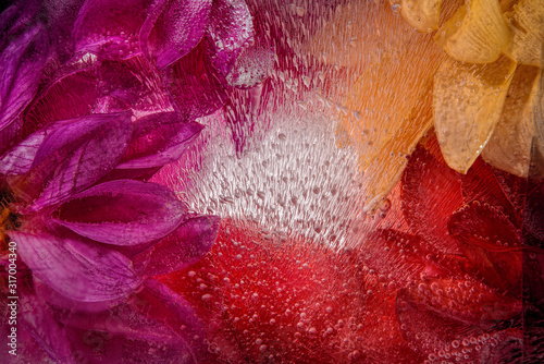 Obraz abstract background with frozen flowers in ice - fototapety do salonu