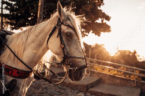 Fotomural  Imagens de cavalos no Alto da Sé, Olinda-PE.