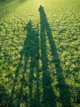 Man And Dog Shadows On The Flo...