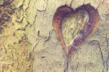Ein Herz Für Die Natur