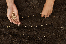 Hand Sowing Seeds To Losing So...