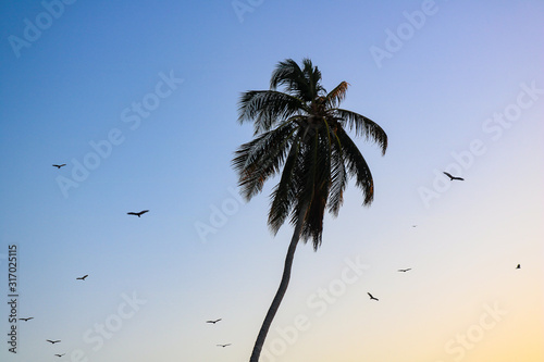 Palm tree at sunset with birds flying around it Canvas Print