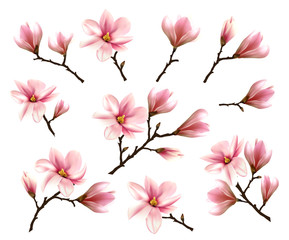 Big Collection with Branches of Pink Magnolia. Vector illustration