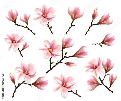 Big Collection with Branches of Pink Magnolia Fotobehang