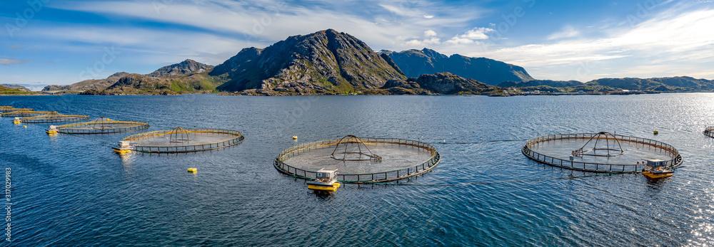 Fototapeta Farm salmon fishing in Norway