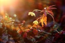 Bokeh Flowers Field Highlight ...