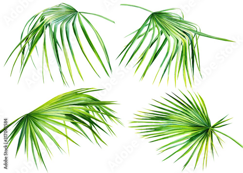 palm leaves on an isolated white background, tropical watercolor drawing, jungle design