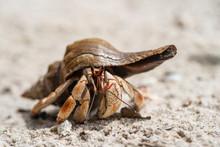 Hermit Crab On The Sandy Beach...