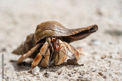 Foto Hermit crab on the sandy beach on the island of Zanzibar, Tanzania, Africa