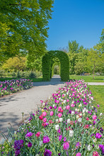 Tulip Flower Bed And Walkway In The Rosengarten Park,  In Munich. Spring Landscape
