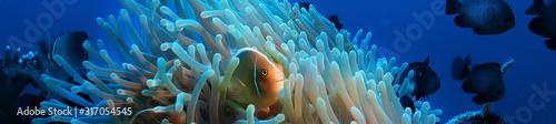 Photo underwater scene / coral reef, world ocean wildlife landscape