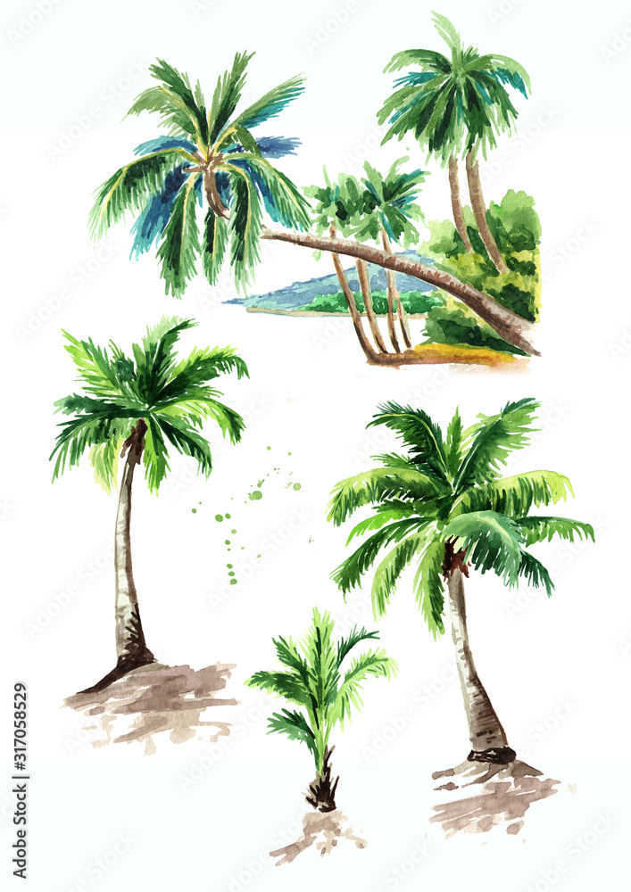 Fototapeta Tropical palm tree set, summer vacation concept. Hand drawn watercolor illustration isolated on white background