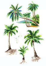 Tropical Palm Tree Set, Summer Vacation Concept. Hand Drawn Watercolor Illustration Isolated On White Background